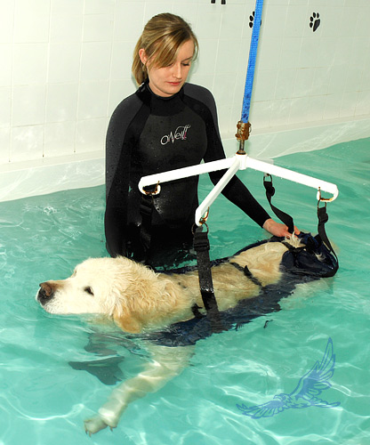 Piper in the Hydrotherapy Hoist